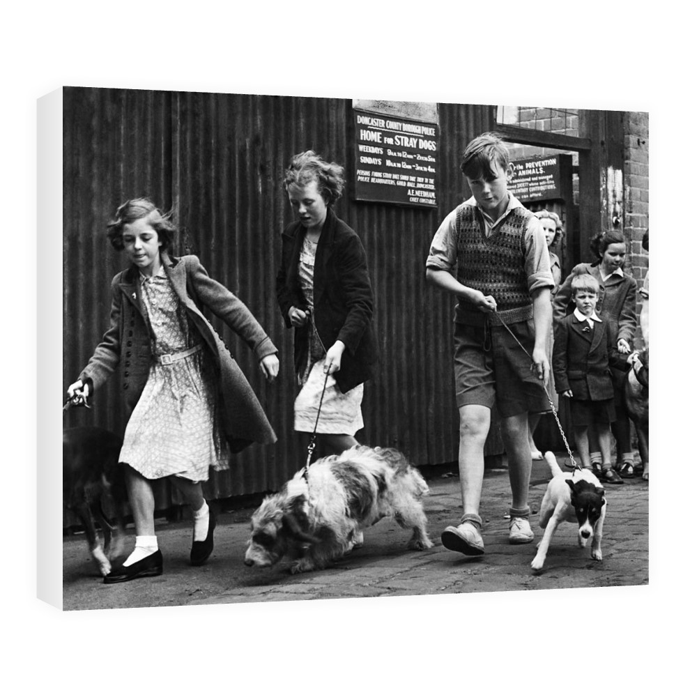 Dog walking in Doncaster, South Yorkshire, 1952 Canvas