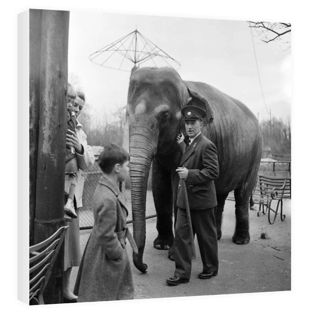 An elephant at London Zoo. 29th December 1954. Canvas
