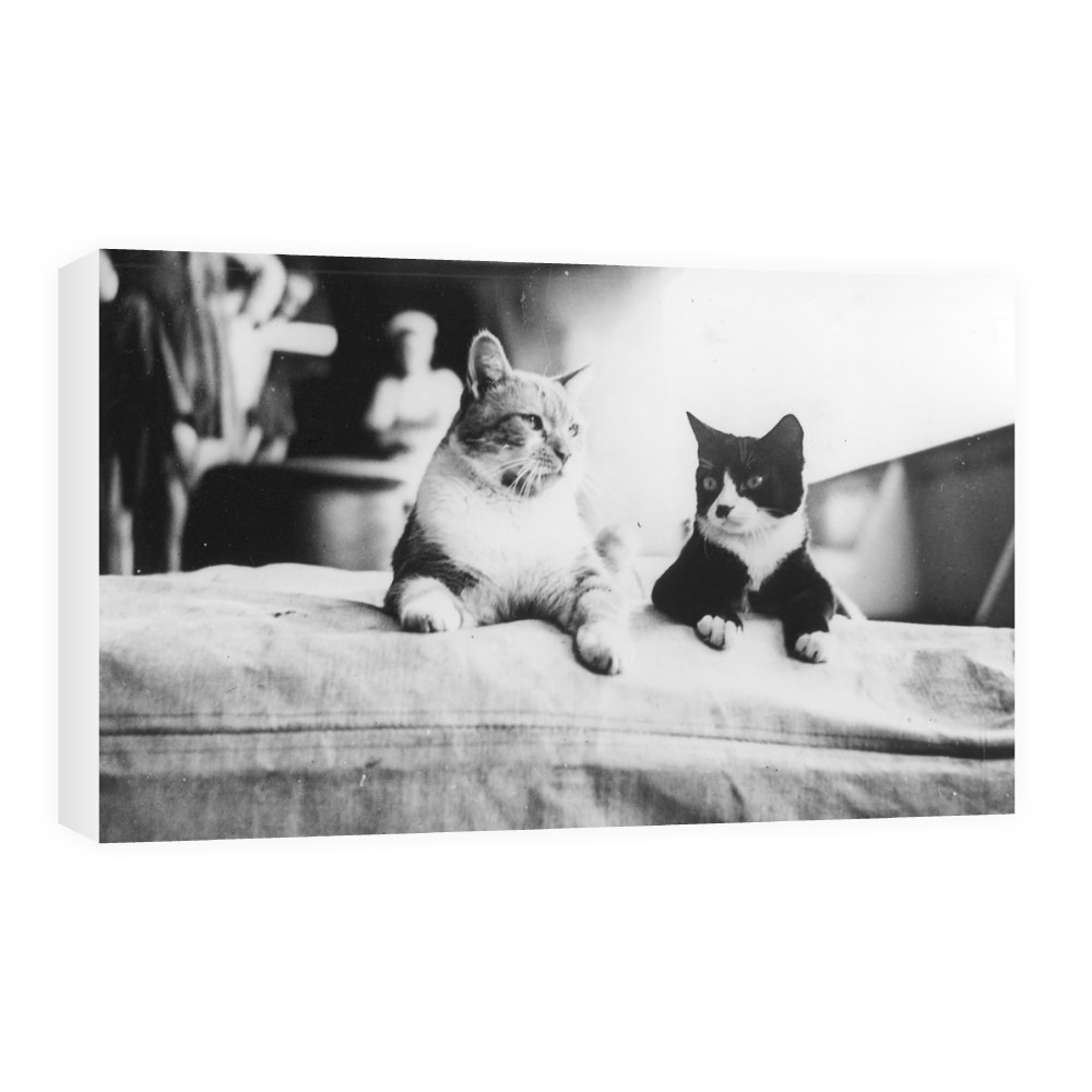 HMS Hood's Pet Cats Canvas