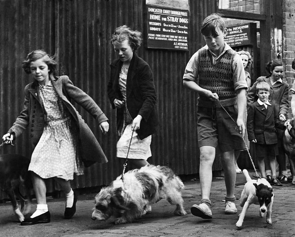 Dog walking in Doncaster, South Yorkshire, 1952 Art Print