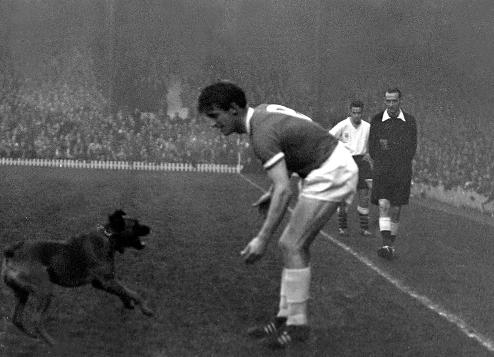 A dog runs onto the pitch at old.. Art Print
