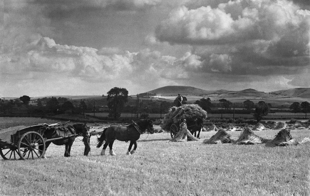 Farming: Harvest near Tring. July 1938  Art Print