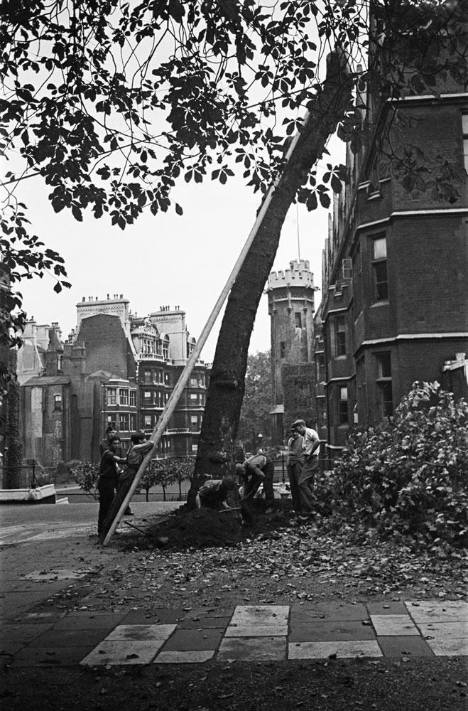Men cutting down a tree in Fountain.. Art Print