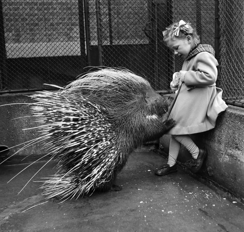 Little girl with a Porcupine at London.. Art Print