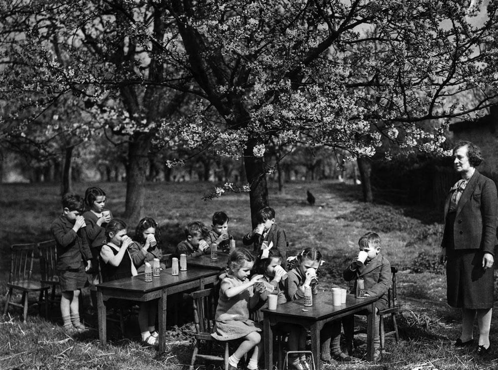 Beneath the blossom of a Kentish Cherry.. Art Print