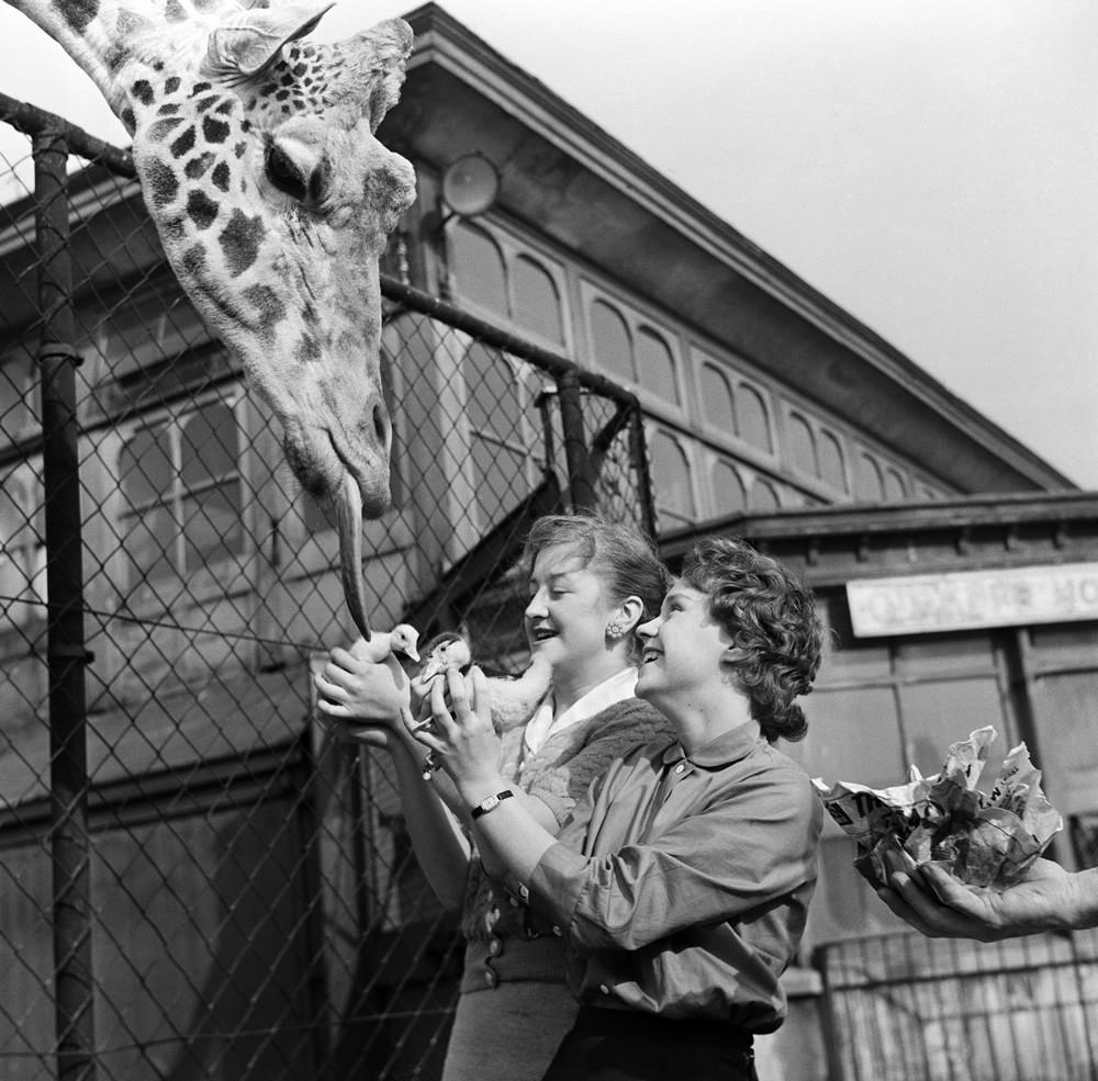 Belle Vue Zoo, 1957 Art Print Art Print