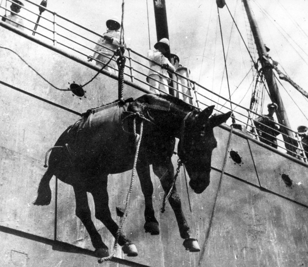 Hoisting a Mule on Board a Ship Art Print