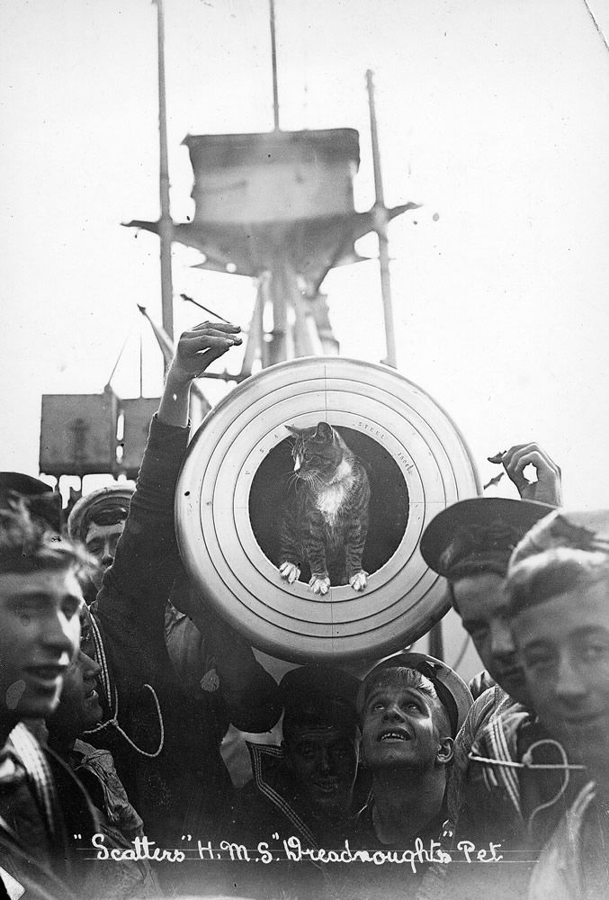 Ship's Cat on HMS Dreadnought Art Print