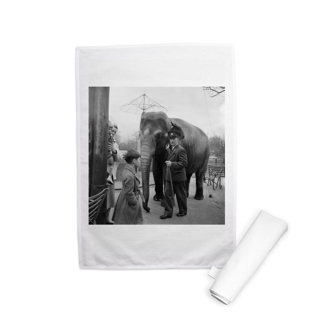 An elephant at London Zoo. 29th December 1954. Tea Towel